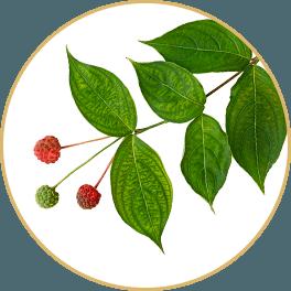 ChiChi_ChocolateBar_Change_Bar_Shan-Zhu-Yu-Dogwood-Fruit_Circle
