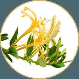 ChiChi_ChocolateBar_Ingredients_Achoo_Bar_Jin-Yin-Hua-Honeysuckle-Flower_Circle