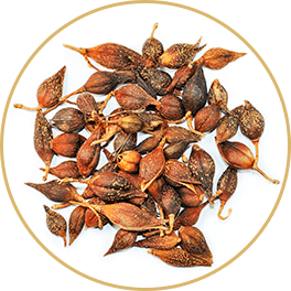 ChiChi_ChocolateBar_Ingredients_Achoo_Bar_Lian-Qiao-Forsythia-Fructus_Circle