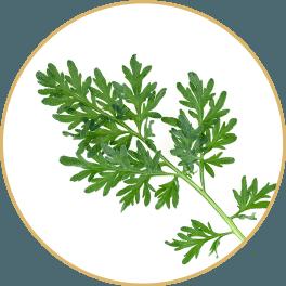 ChiChi_ChocolateBar_Ingredients_Charge_Bar_Yin-Chen-Hao-Artemisia-Leaf_Circle